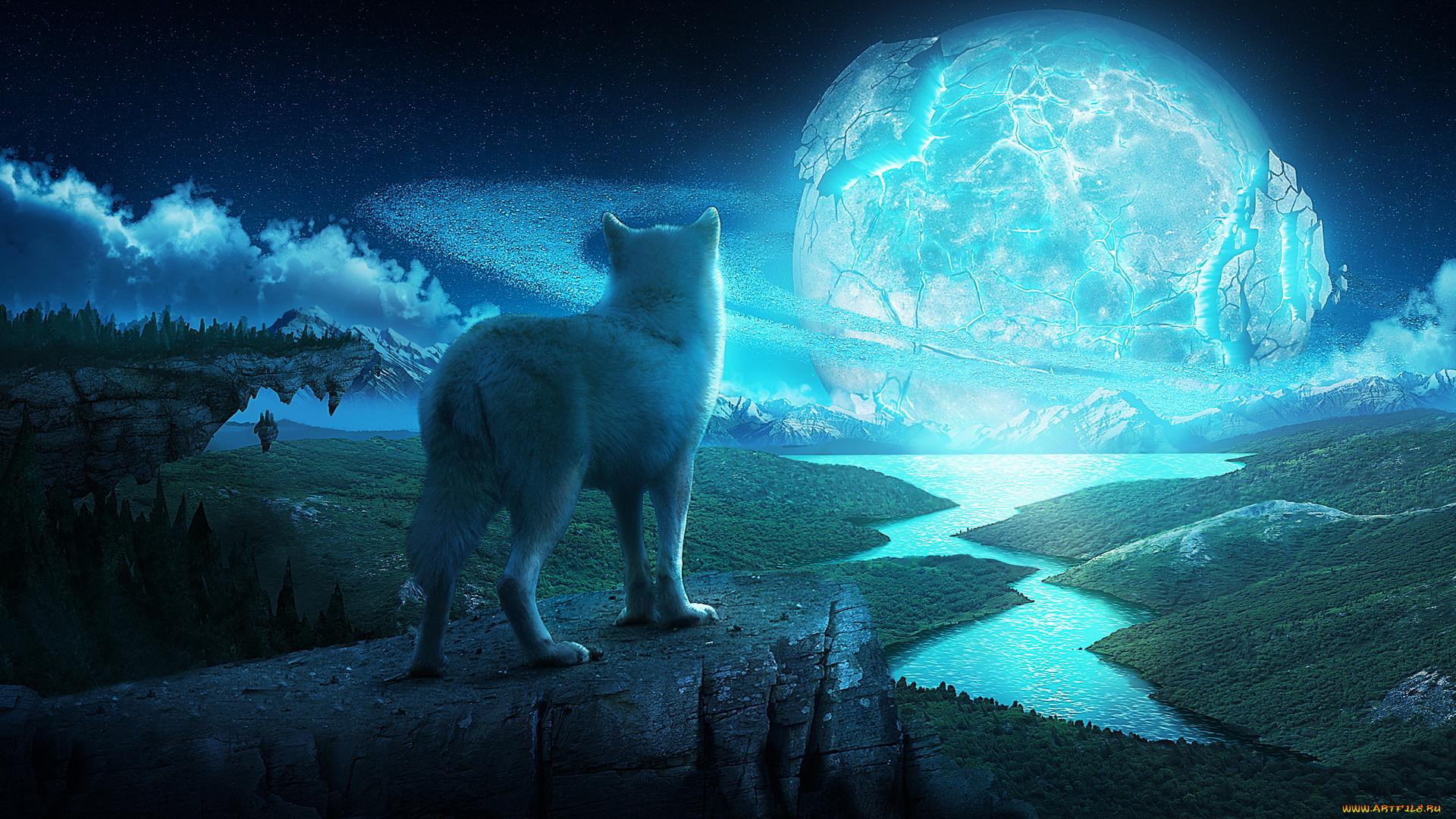 Фото волка ночью на рабочий стол